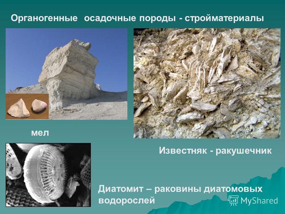 Органогенные осадочные породы - стройматериалы мел Известняк - ракушечник Диатомит – раковины диатомовых водорослей