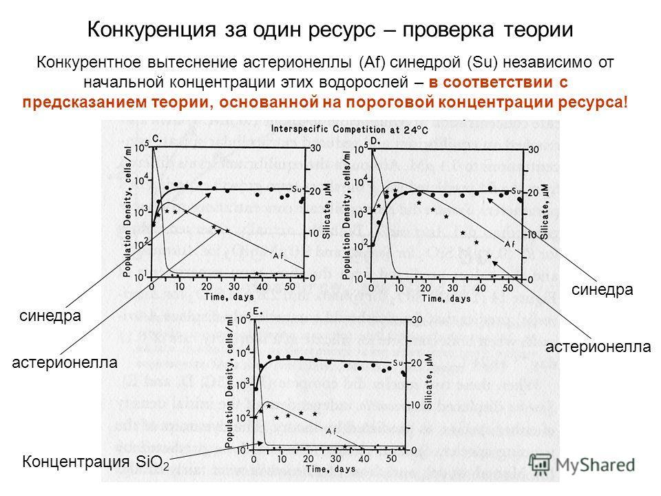 Конкурентное вытеснение астерионеллы (Af) синедрой (Su) независимо от начальной концентрации этих водорослей – в соответствии с предсказанием теории, основанной на пороговой концентрации ресурса! синедра астерионелла Концентрация SiO 2 синедра астери