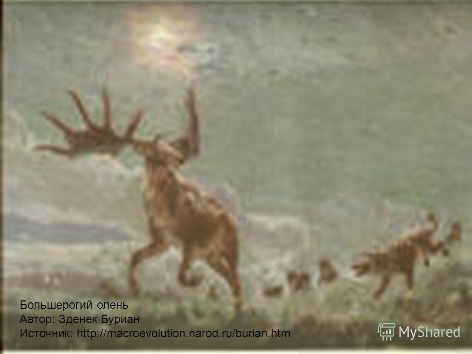 Большерогий олень Автор: Зденек Буриан Источник: http://macroevolution.narod.ru/burian.htm