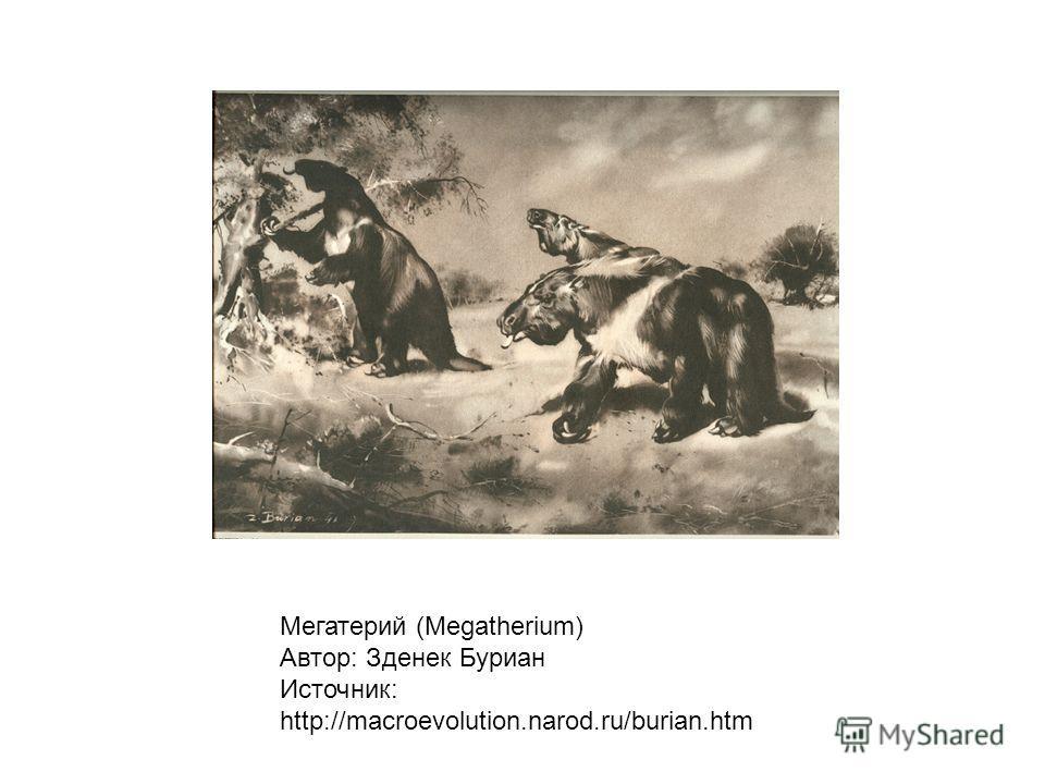 Мегатерий (Megatherium) Автор: Зденек Буриан Источник: http://macroevolution.narod.ru/burian.htm