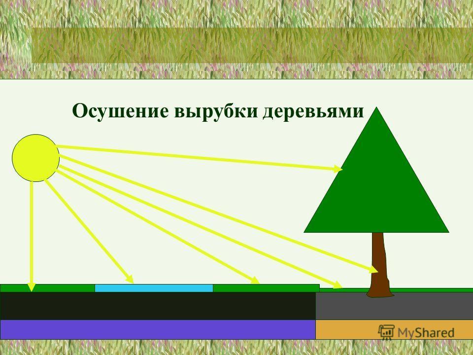 Осушение вырубки деревьями