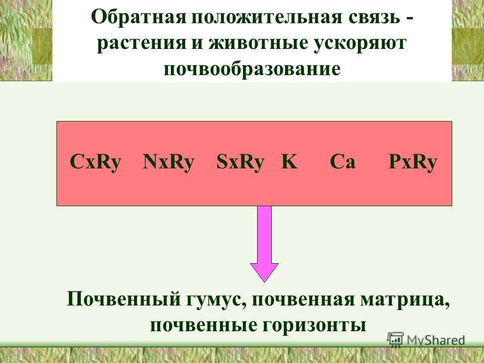 СxRy NxRy SxRy K Ca PxRy Почвенный гумус, почвенная матрица, почвенные горизонты Обратная положительная связь - растения и животные ускоряют почвообразование