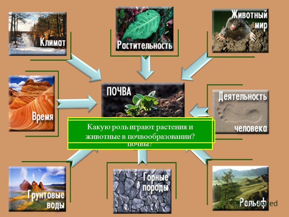 С чего начинается образование почвы? Какие горные породы наиболее распространены на территории России? Как влияет рельеф на процесс почвообразования? Какое влияние оказывает уровень грунтовых вод на почвы? Какие компоненты климата оказывают влияние н