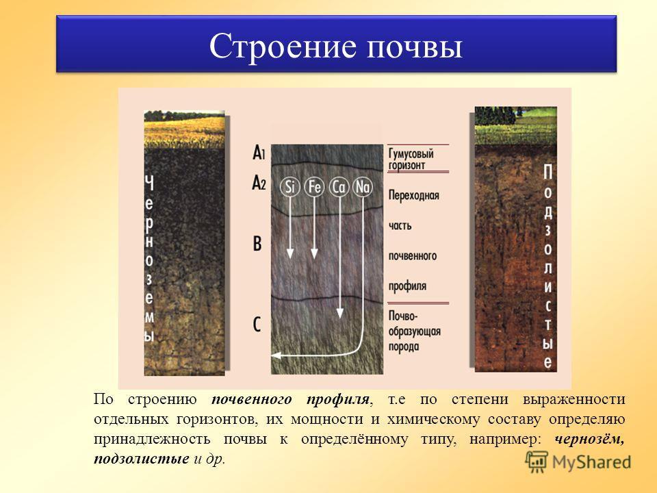 Строение почвы По строению почвенного профиля, т.е по степени выраженности отдельных горизонтов, их мощности и химическому составу определяю принадлежность почвы к определённому типу, например: чернозём, подзолистые и др.