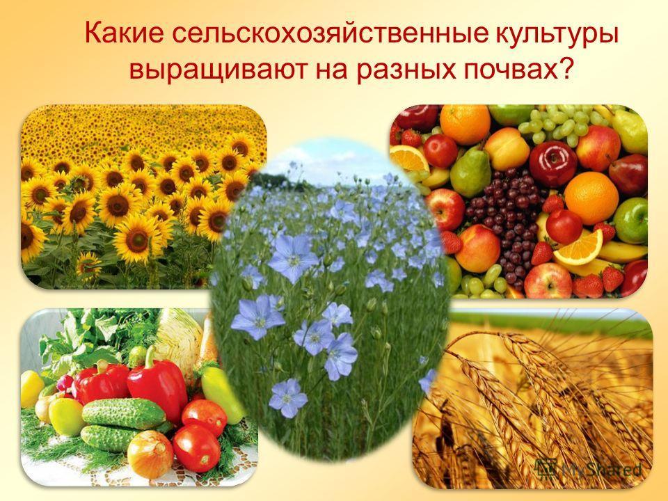 Какие сельскохозяйственные культуры выращивают на разных почвах?