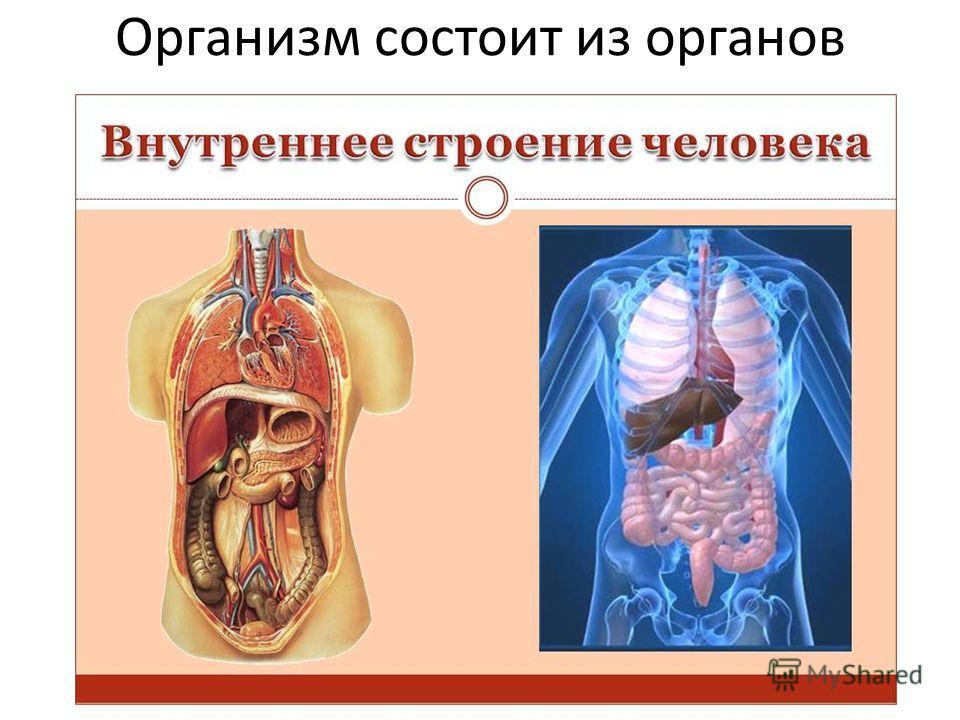 Организм состоит из органов