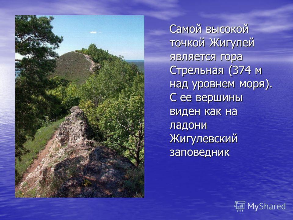 Самой высокой точкой Жигулей является гора Стрельная (374 м над уровнем моря). С ее вершины виден как на ладони Жигулевский заповедник Самой высокой точкой Жигулей является гора Стрельная (374 м над уровнем моря). С ее вершины виден как на ладони Жиг