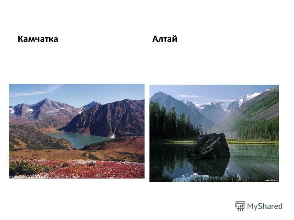 Камчатка Алтай