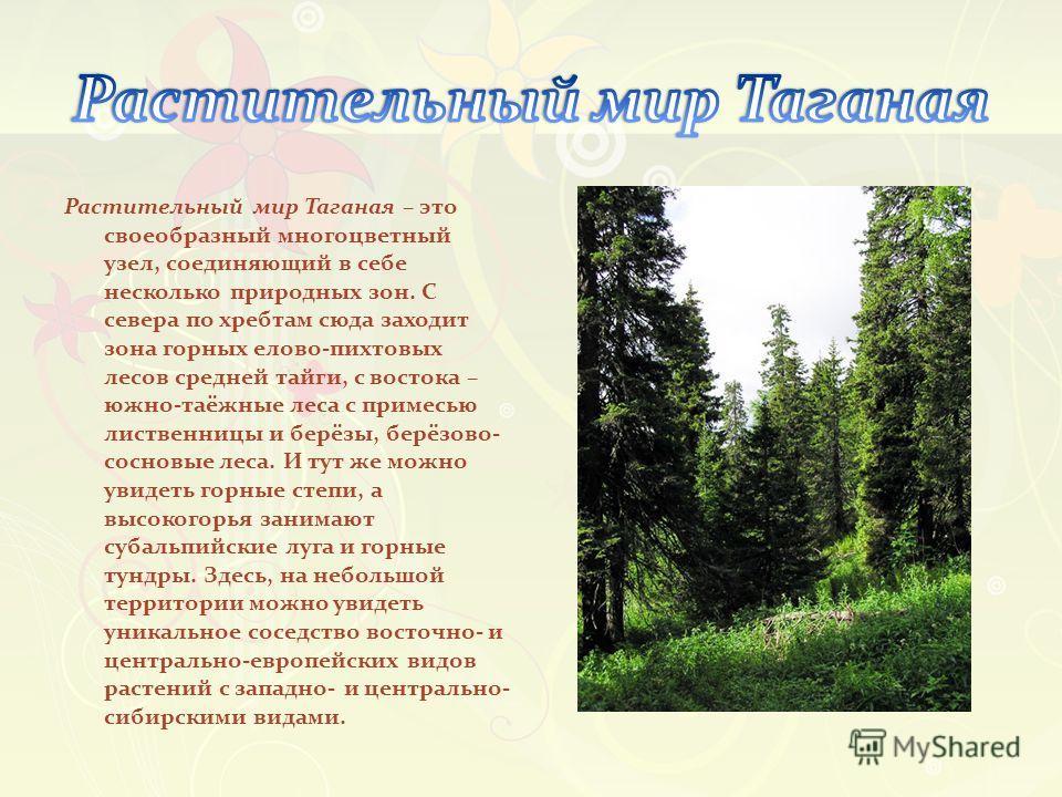 Растительный мир Таганая – это своеобразный многоцветный узел, соединяющий в себе несколько природных зон. С севера по хребтам сюда заходит зона горных елово-пихтовых лесов средней тайги, с востока – южно-таёжные леса с примесью лиственницы и берёзы,