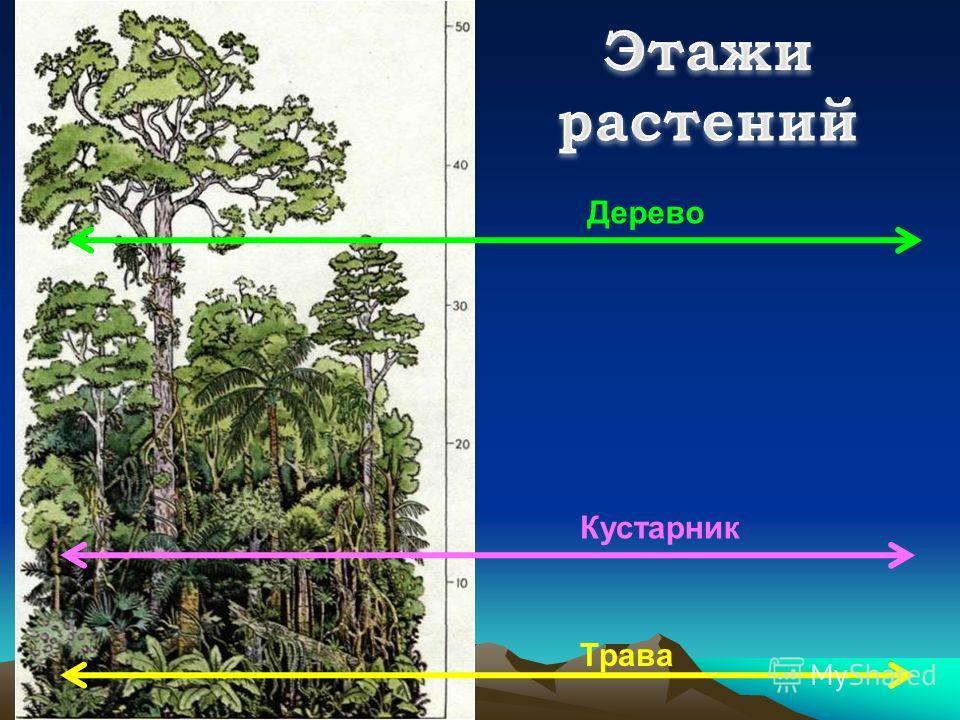 Трава Кустарник Дерево