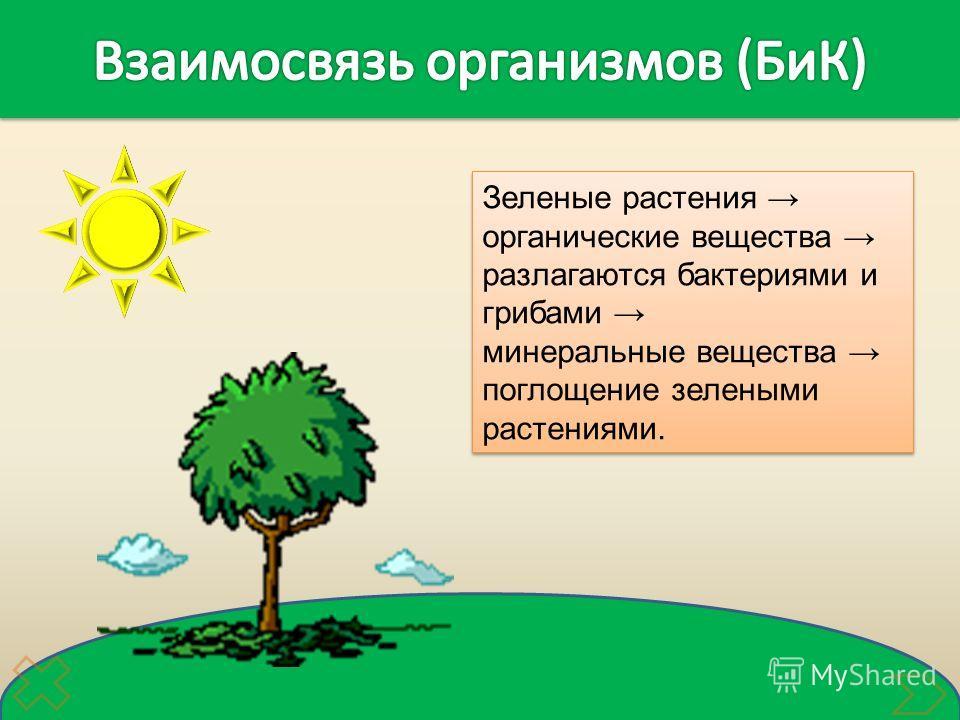 Зеленые растения органические вещества разлагаются бактериями и грибами минеральные вещества поглощение зелеными растениями. Зеленые растения органические вещества разлагаются бактериями и грибами минеральные вещества поглощение зелеными растениями.