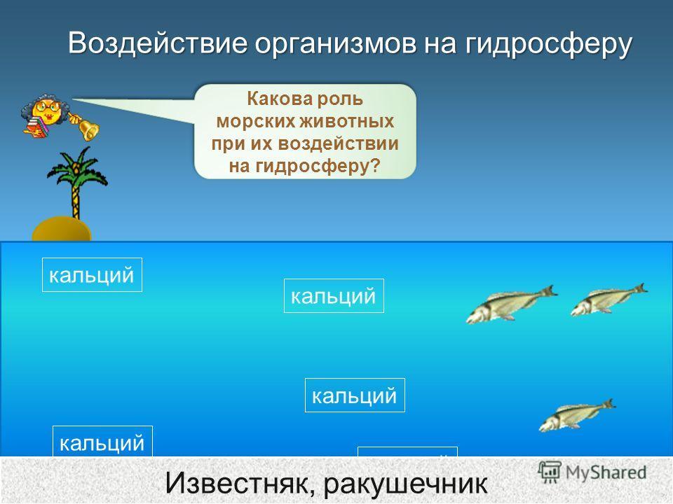 Воздействие организмов на гидросферу Какова роль морских животных при их воздействии на гидросферу? кальций Известняк, ракушечник