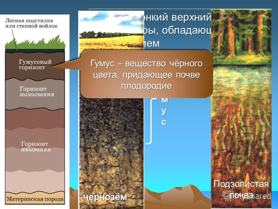 Почва – тонкий верхний слой земной коры, обладающий плодородием чернозём Подзолистая почва гумусгумусгумусгумус Гумус – вещество чёрного цвета, придающее почве плодородие