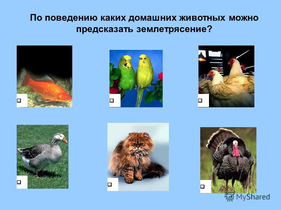По поведению каких домашних животных можно предсказать землетрясение?