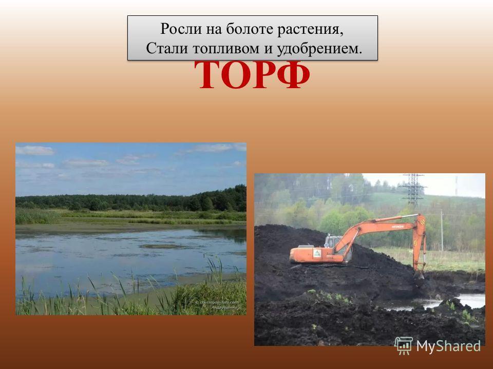 Росли на болоте растения, Стали топливом и удобрением. Росли на болоте растения, Стали топливом и удобрением. ТОРФ