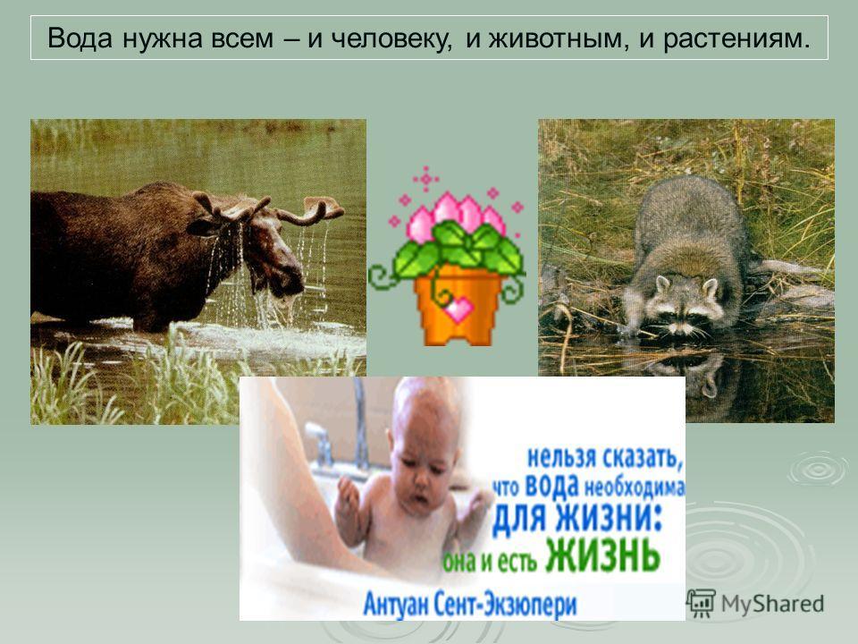 Вода нужна всем – и человеку, и животным, и растениям.