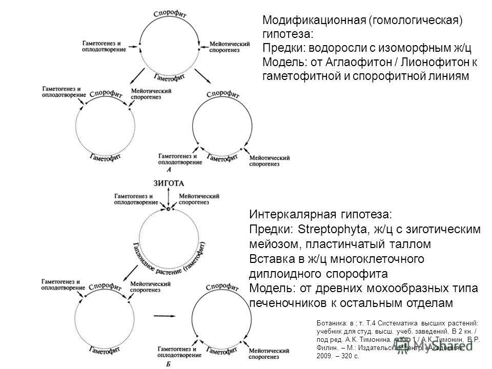 Модификационная (гомологическая) гипотеза: Предки: водоросли с изоморфным ж/ц Модель: от Аглаофитон / Лионофитон к гаметофитной и спорофитной линиям Интеркалярная гипотеза: Предки: Streptophyta, ж/ц с зиготическим мейозом, пластинчатый таллом Вставка