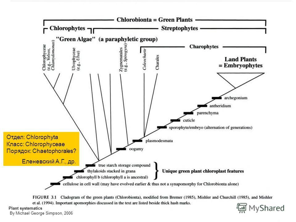 Plant systematics By Michael George Simpson, 2006 Отдел: Chlorophyta Класс: Chlorophyceae Порядок: Chaetophorales? Еленевский А.Г., др.