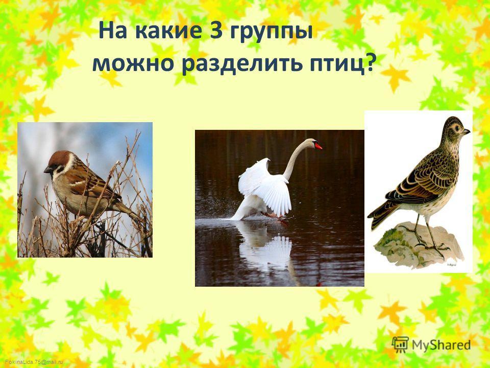 FokinaLida.75@mail.ru На какие 3 группы можно разделить птиц?