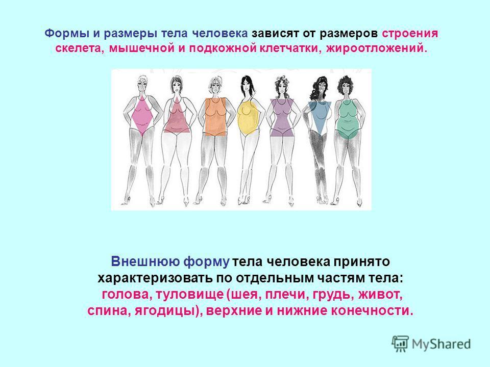 Внешнюю форму тела человека принято характеризовать по отдельным частям тела: голова, туловище (шея, плечи, грудь, живот, спина, ягодицы), верхние и нижние конечности. Формы и размеры тела человека зависят от размеров строения скелета, мышечной и под