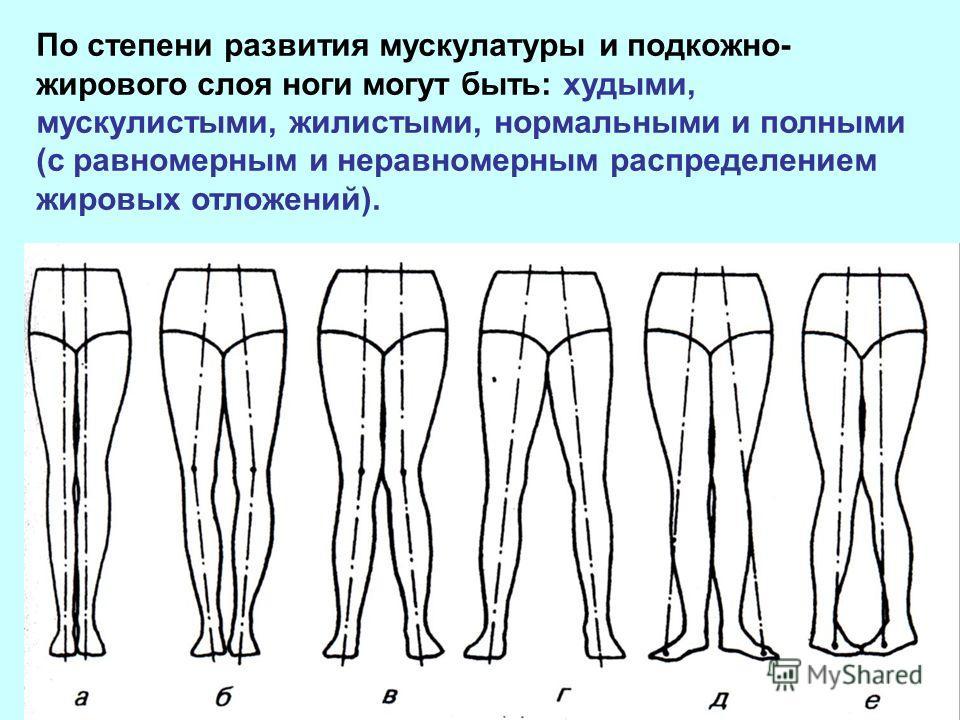 По степени развития мускулатуры и подкожно- жирового слоя ноги могут быть: худыми, мускулистыми, жилистыми, нормальными и полными (с равномерным и неравномерным распределением жировых отложений).