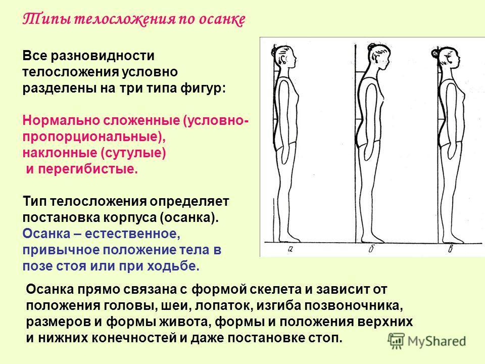 Все разновидности телосложения условно разделены на три типа фигур: Нормально сложенные (условно- пропорциональные), наклонные (сутулые) и перегибистые. Тип телосложения определяет постановка корпуса (осанка). Осанка – естественное, привычное положен