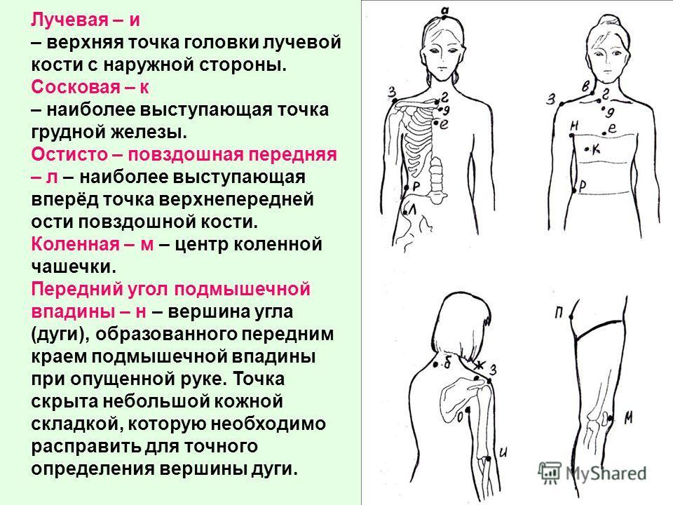 Лучевая – и – верхняя точка головки лучевой кости с наружной стороны. Сосковая – к – наиболее выступающая точка грудной железы. Остисто – повздошная передняя – л – наиболее выступающая вперёд точка верхнепередней ости повздошной кости. Коленная – м –