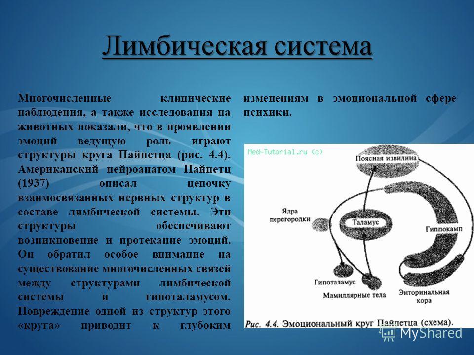 Лимбическая система Многочисленные клинические наблюдения, а также исследования на животных показали, что в проявлении эмоций ведущую роль играют структуры круга Пайпетца (рис. 4.4). Американский нейроанатом Пайпетц (1937) описал цепочку взаимосвязан
