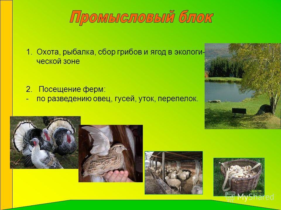 1.Охота, рыбалка, сбор грибов и ягод в экологи- ческой зоне 2. Посещение ферм: -по разведению овец, гусей, уток, перепелок.