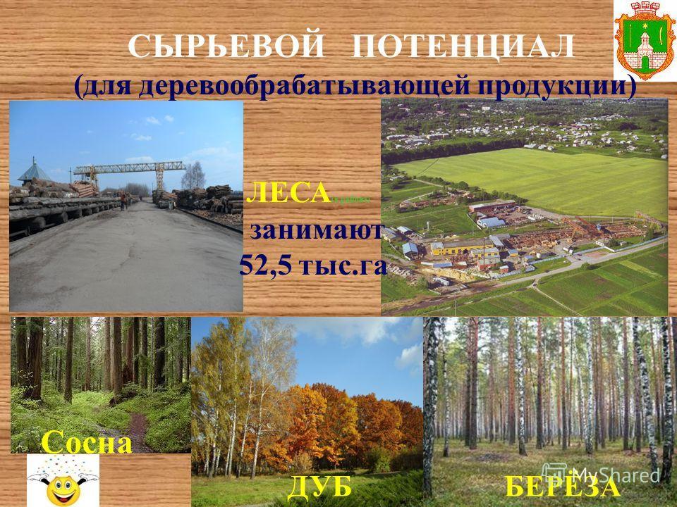 СЫРЬЕВОЙ ПОТЕНЦИАЛ (для деревообрабатывающей продукции) ЛЕСА (в районе) занимают 52,5 тыс.га Сосна ДУББЕРЁЗА