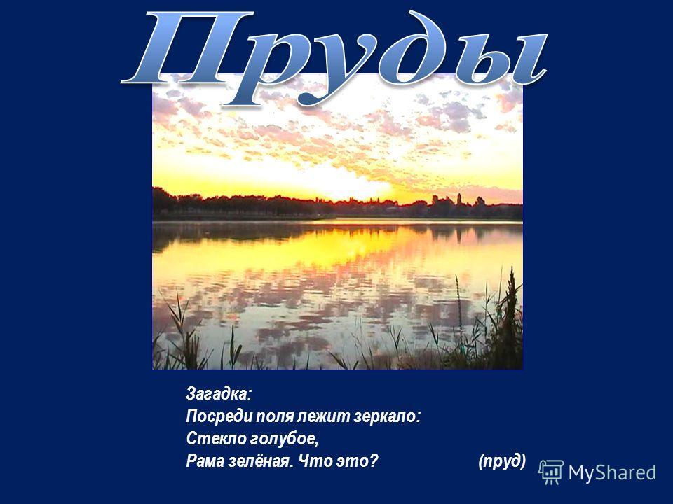 Самое большое озеро Ростовской области – Маныч – Гудило. Это реликтовое тектоническое озеро. Расположено оно в центральной части Кумо – Манычской впадины. Средняя глубина – 0,66 м. Площадь – 300 км 2. Вода в озере солёная. Самое большое озеро Ростовс
