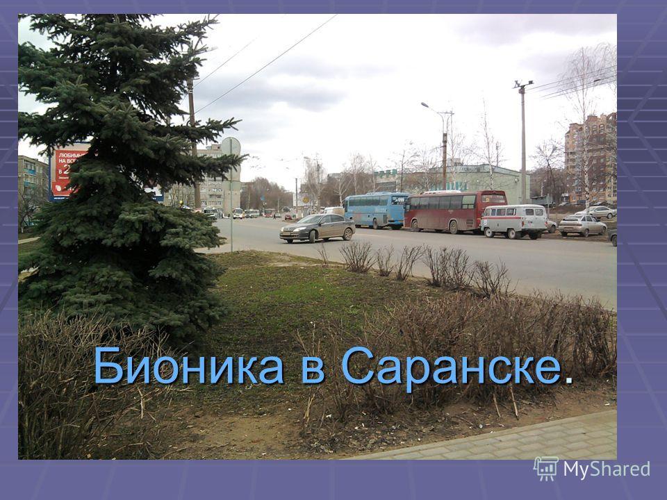 Бионика в Саранске.
