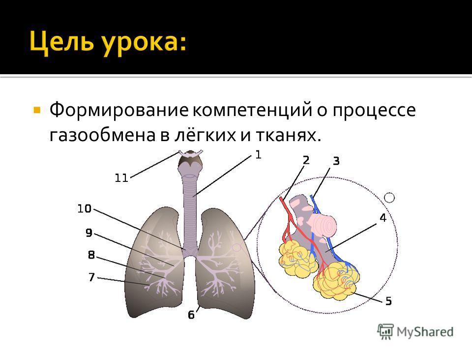 Формирование компетенций о процессе газообмена в лёгких и тканях.