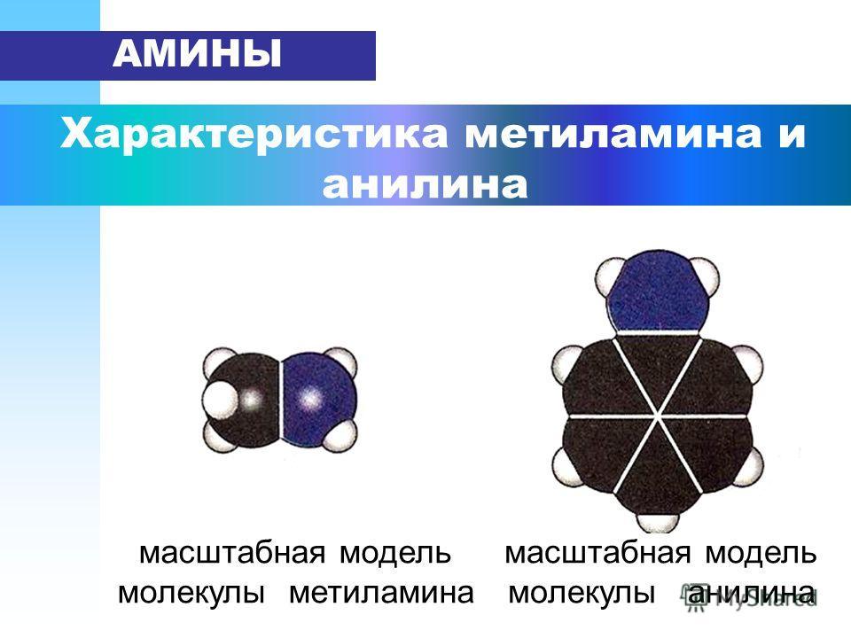 Характеристика метиламина и анилина АМИНЫ масштабная модель молекулы метиламина масштабная модель молекулы анилина