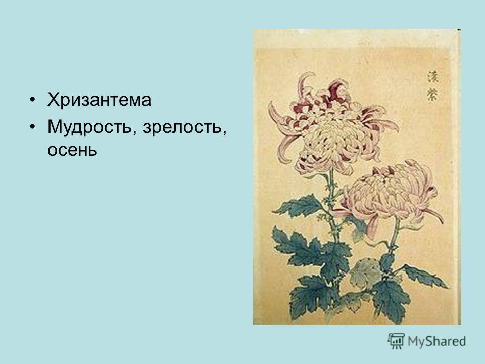Хризантема Мудрость, зрелость, осень