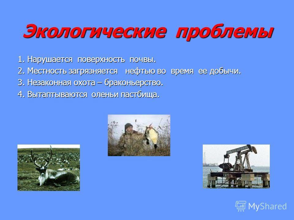 Экологические проблемы 1. Нарушается поверхность почвы. 2. Местность загрязняется нефтью во время ее добычи. 3. Незаконная охота – браконьерство. 4. Вытаптываются оленьи пастбища.