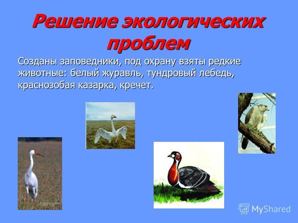 Решение экологических проблем Созданы заповедники, под охрану взяты редкие животные: белый журавль, тундровый лебедь, краснозобая казарка, кречет.