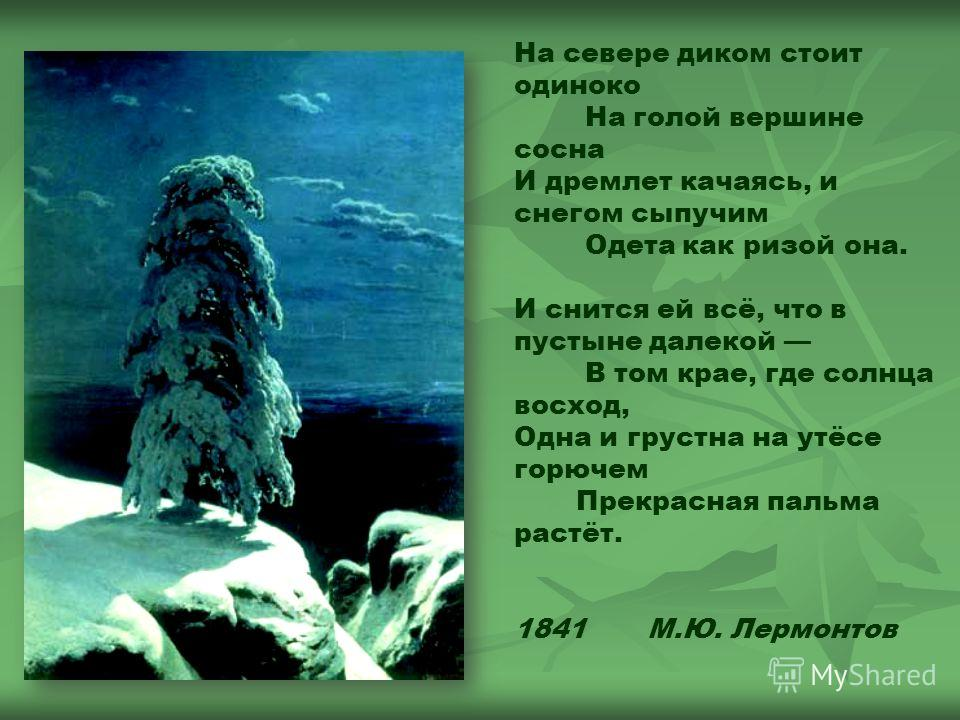 На севере диком стоит одиноко На голой вершине сосна И дремлет качаясь, и снегом сыпучим Одета как ризой она. И снится ей всё, что в пустыне далекой В том крае, где солнца восход, Одна и грустна на утёсе горючем Прекрасная пальма растёт. 1841 М.Ю. Ле