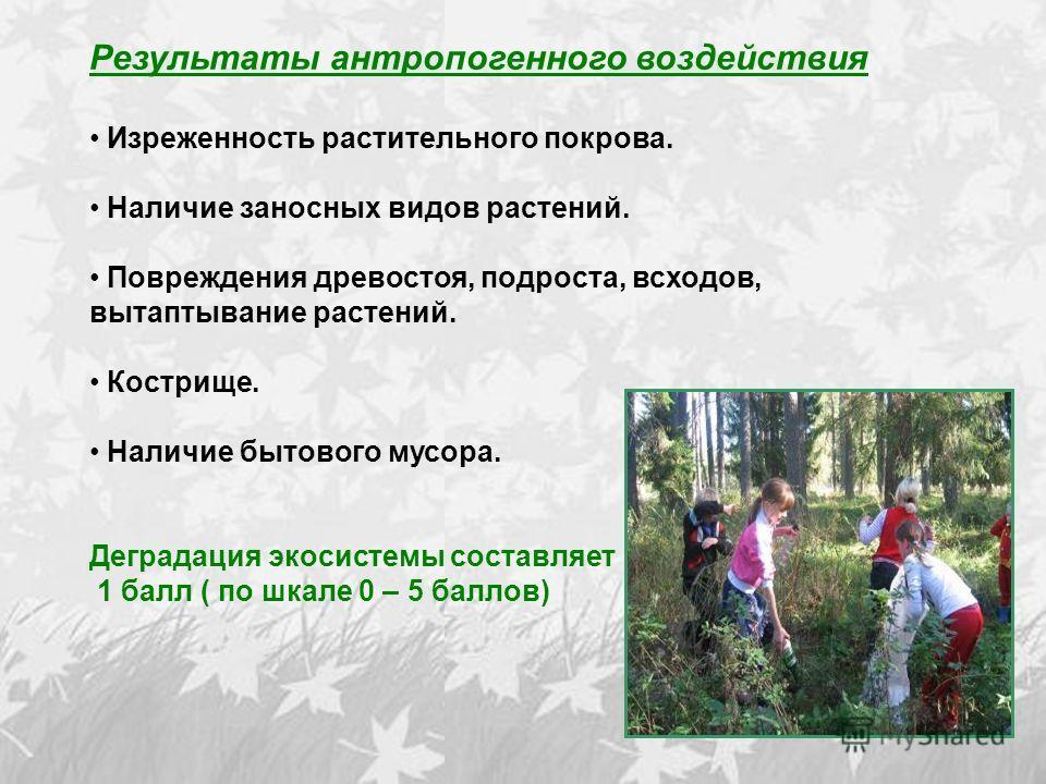 Результаты антропогенного воздействия Изреженность растительного покрова. Наличие заносных видов растений. Повреждения древостоя, подроста, всходов, вытаптывание растений. Кострище. Наличие бытового мусора. Деградация экосистемы составляет 1 балл ( п
