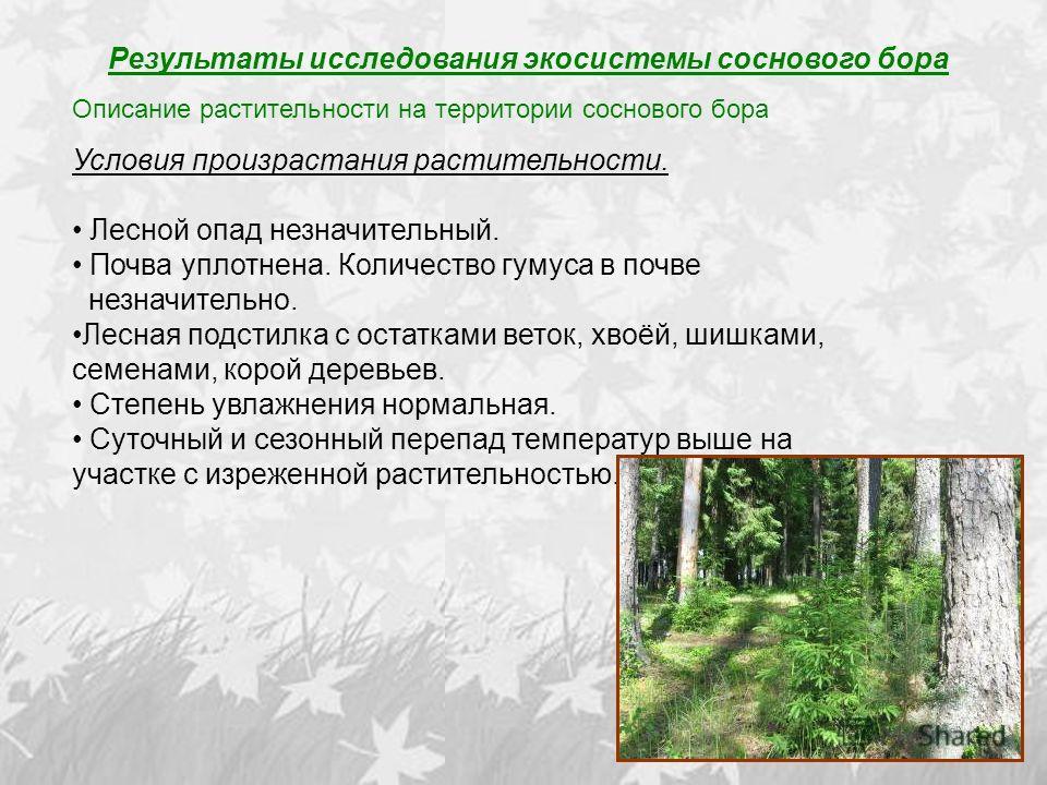 Результаты исследования экосистемы соснового бора Описание растительности на территории соснового бора Условия произрастания растительности. Лесной опад незначительный. Почва уплотнена. Количество гумуса в почве незначительно. Лесная подстилка с оста