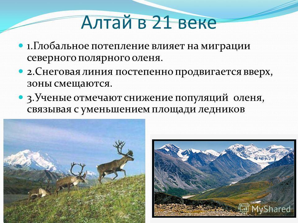 Алтай в 21 веке 1. Глобальное потепление влияет на миграции северного полярного оленя. 2. Снеговая линия постепенно продвигается вверх, зоны смещаются. 3. Ученые отмечают снижение популяций оленя, связывая с уменьшением площади ледников