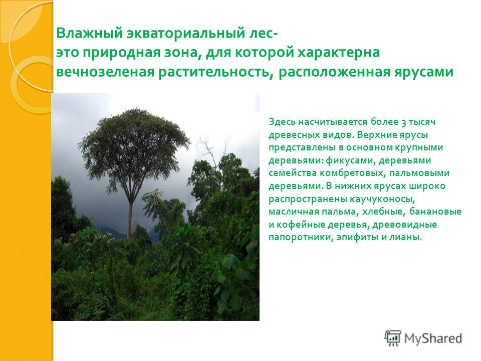 Влажный экваториальный лес - это природная зона, для которой характерна вечнозеленая растительность, расположенная ярусами Здесь насчитывается более 3 тысяч древесных видов. Верхние ярусы представлены в основном крупными деревьями : фикусами, деревья