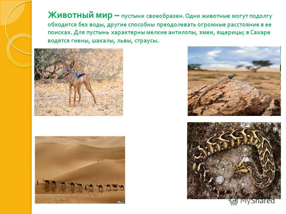 –. Животный мир – пустыни своеобразен. Одни животные могут подолгу обходится без воды, другие способны преодолевать огромные расстояние в ее поисках. Для пустынь характерны мелкие антилопы, змеи, ящерицы ; в Сахаре водятся гиены, шакалы, львы, страус