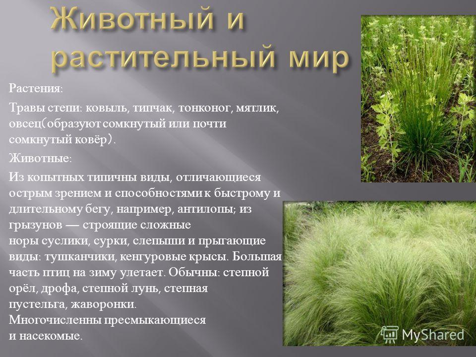 Растения: Травы степи: ковыль, типчак, тонконог, мятлик, овсец(образуют сомкнутый или почти сомкнутый ковёр). Животные: Из копытных типичны виды, отличающиеся острым зрением и способностями к быстрому и длительному бегу, например, антилопы; из грызун