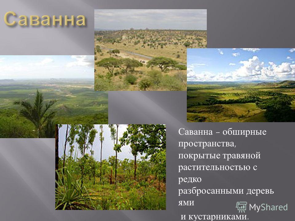 Саванна - обширные пространства, покрытые травяной растительностью с редко разбросанными деревь ями и кустарниками.