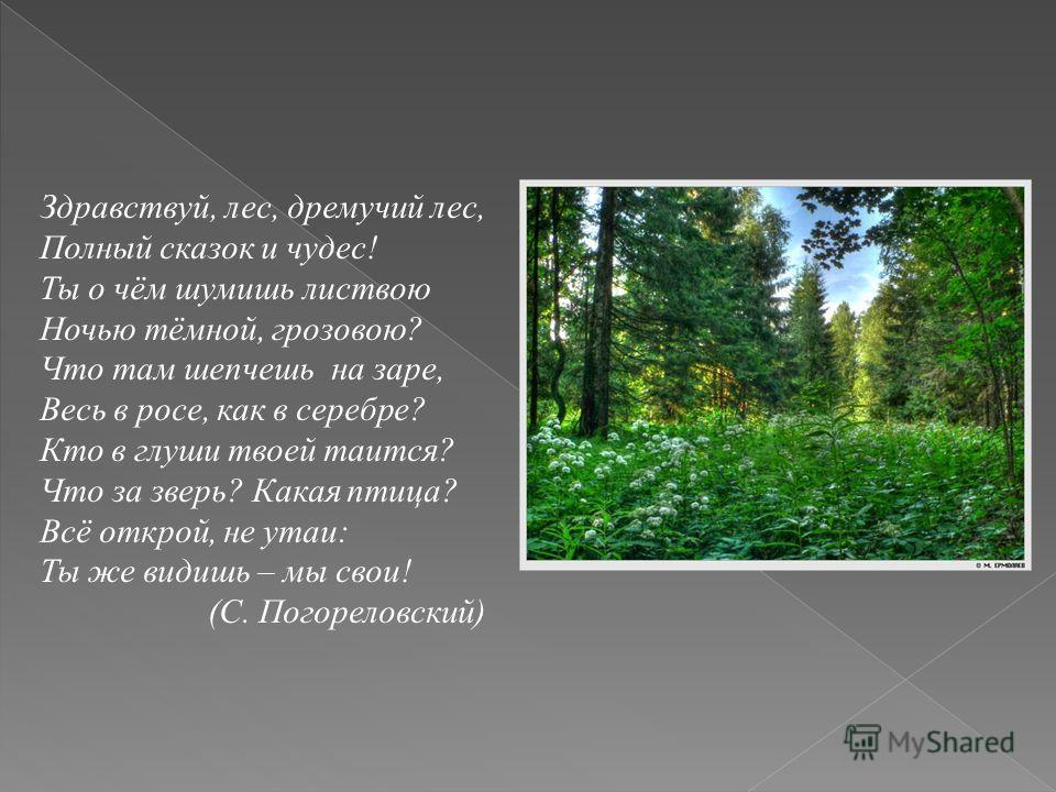 Здравствуй, лес, дремучий лес, Полный сказок и чудес! Ты о чём шумишь листвою Ночью тёмной, грозовою? Что там шепчешь на заре, Весь в росе, как в серебре? Кто в глуши твоей таится? Что за зверь? Какая птица? Всё открой, не утаи: Ты же видишь – мы сво