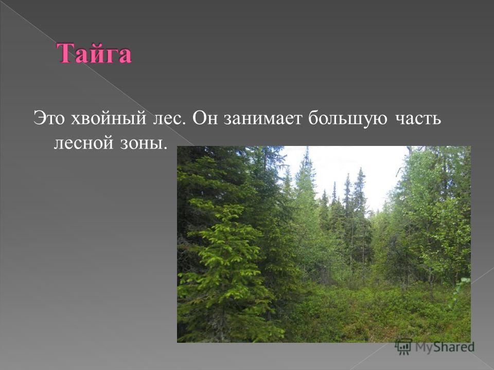 Это хвойный лес. Он занимает большую часть лесной зоны.