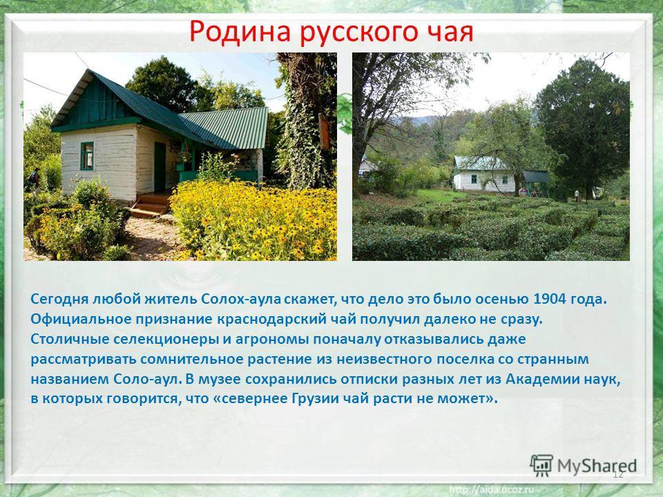 Родина русского чая Сегодня любой житель Солох-аула скажет, что дело это было осенью 1904 года. Официальное признание краснодарский чай получил далеко не сразу. Столичные селекционеры и агрономы поначалу отказывались даже рассматривать сомнительное р