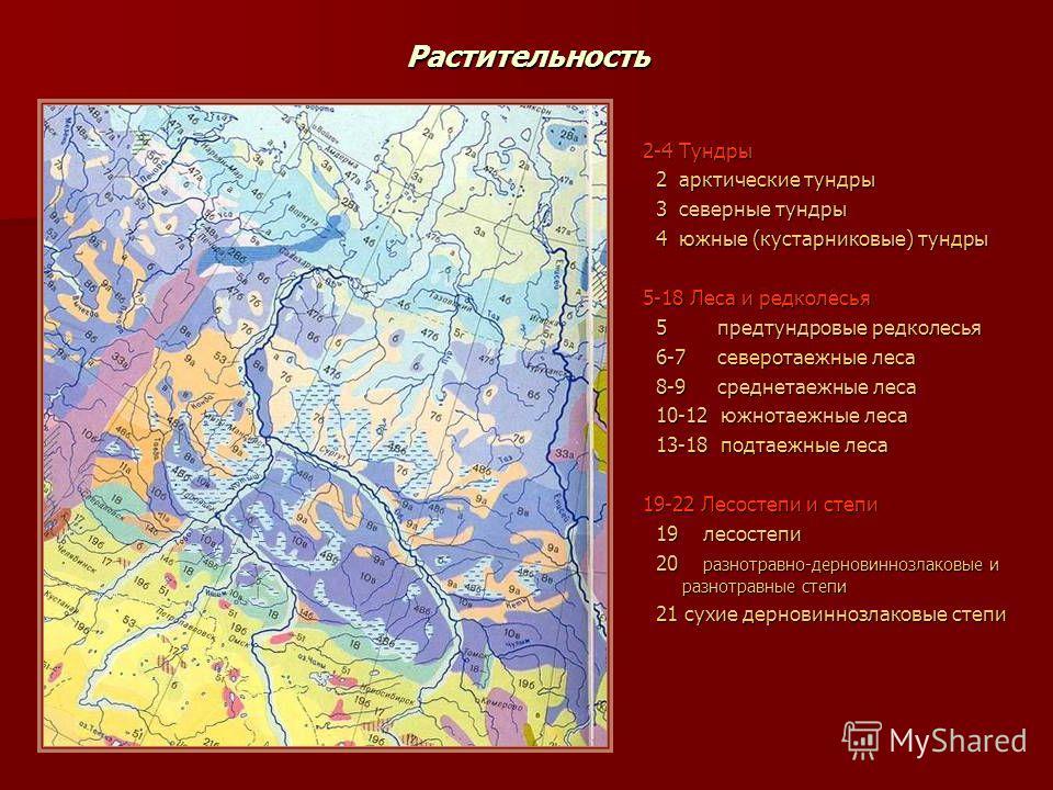 Растительность 2-4 Тундры 2 арктические тундры 2 арктические тундры 3 северные тундры 3 северные тундры 4 южные (кустарниковые) тундры 4 южные (кустарниковые) тундры 5-18 Леса и редколесья 5 предтундровые редколесья 5 предтундровые редколесья 6-7 сев