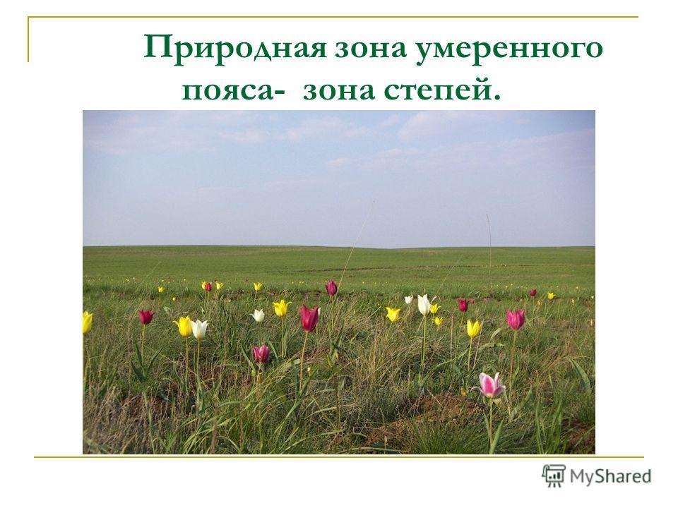Природная зона умеренного пояса- зона степей.